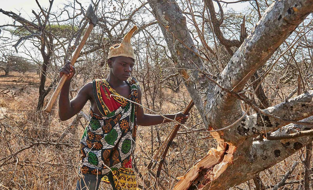 Wahadzabe man cutting tree branch