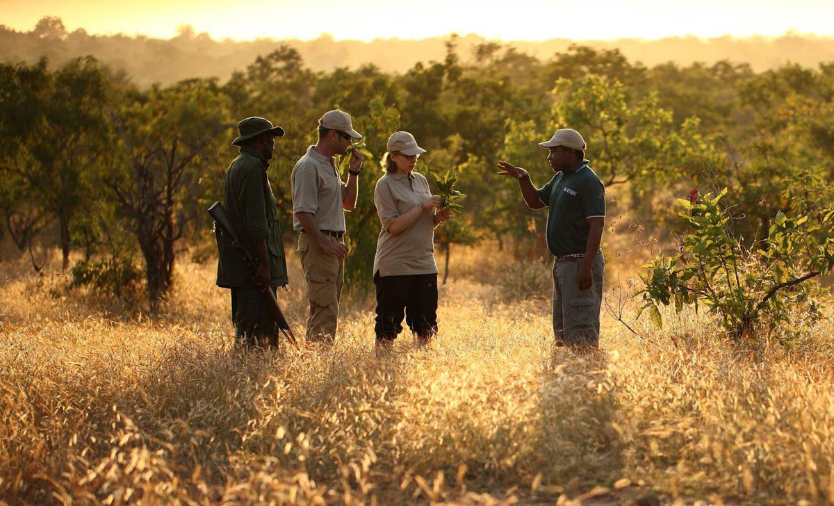 Walking safari, The Retreat at Selous, Tanzania.