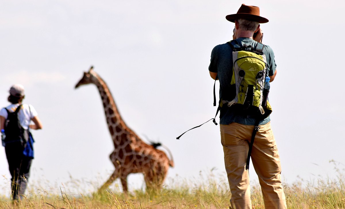 Walking safari photographing giraffe
