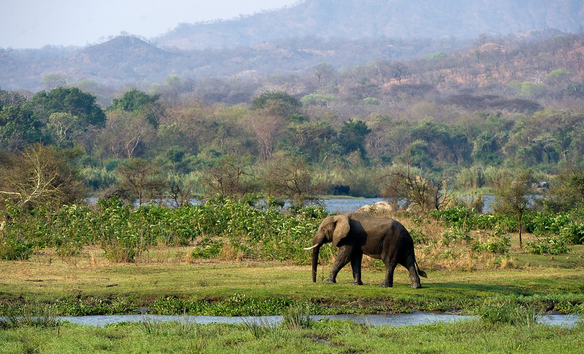 malawi-big-five-para-1-elephant-present-in-majete-reserve-resized-69330.jpg