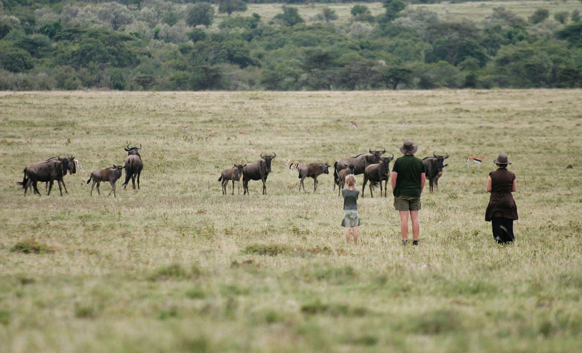 family watching wildebeest migration