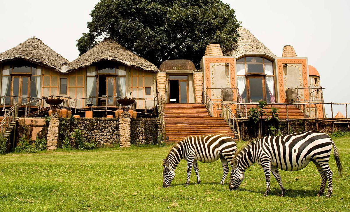 zebra in front of ngorongoro crater lodge